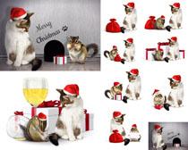 圣诞帽猫咪摄影时时彩娱乐网站