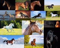 奔驰中的马摄影时时彩娱乐网站
