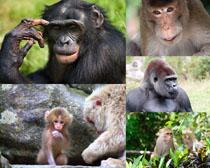 树木猴子摄影时时彩娱乐网站