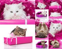 可爱猫咪摄影拍摄时时彩娱乐网站
