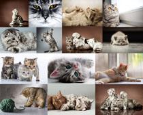 玩耍的猫咪摄影时时彩娱乐网站