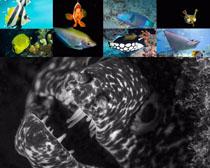 美丽的海底鱼类拍摄时时彩娱乐网站