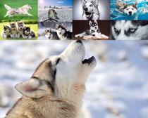 犬狗狗摄影时时彩娱乐网站
