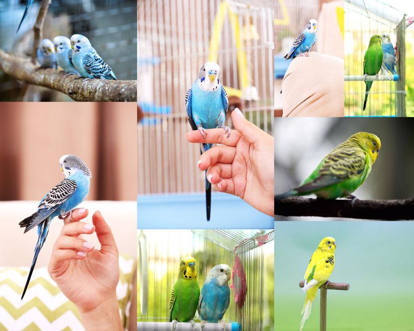 鹦鹉拍摄影时时彩娱乐网站