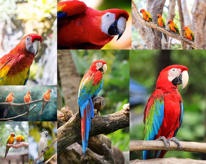 树枝上的鹦鹉摄影时时彩娱乐网站
