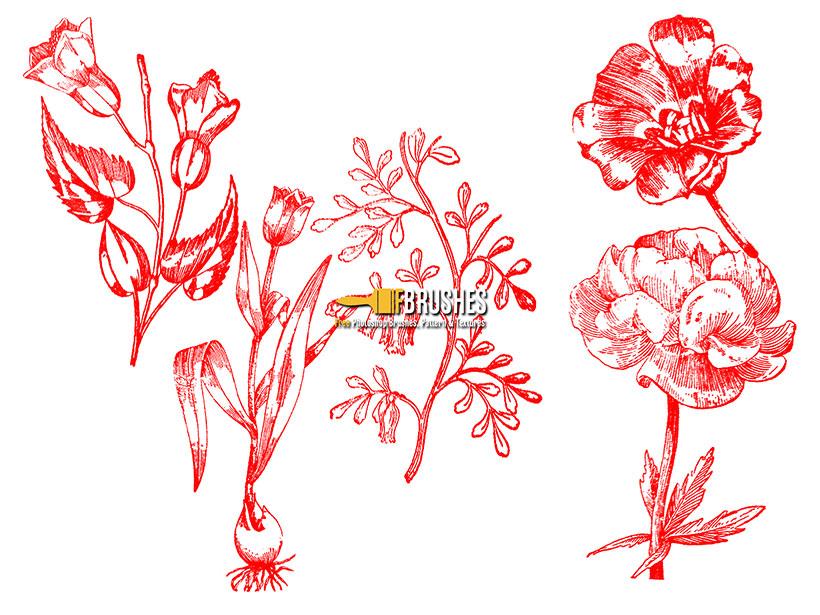 手绘植物ps笔刷素材