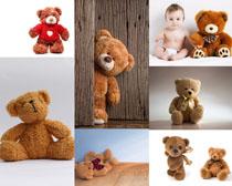 玩具小熊拍摄高清图片