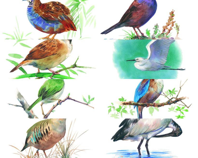 水墨画鸟类摄影时时彩娱乐网站
