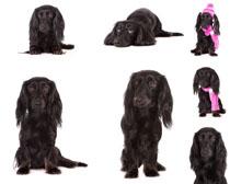 可爱黑毛狗摄影时时彩娱乐网站