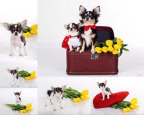 箱子花朵与小孩摄影时时彩娱乐网站