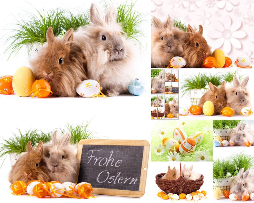 可爱情侣兔子摄影高清图片