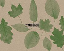 绿色树叶笔刷素材