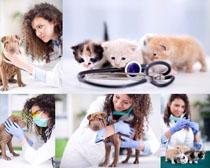 生病的小猫与狗摄影时时彩娱乐网站