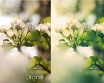 植物清新綠色效果PS動作素材
