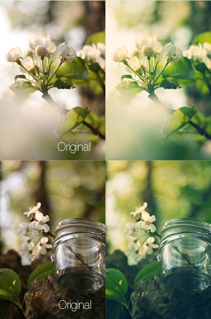 植物清新绿色效果PS动作素材