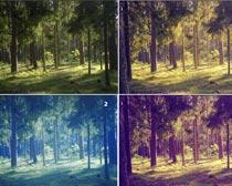 树林调色动作PS素材