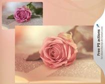 鲜花花卉复古色调PS动作素材
