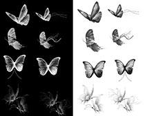蝴蝶笔刷素材