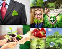 绿色植物生命摄影高清图片