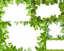 植物绿叶相框摄影高清图片