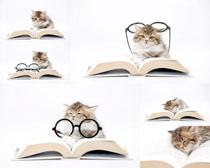 猫咪与书本摄影时时彩娱乐网站