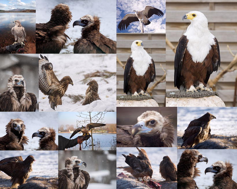 老鹰写真摄影时时彩娱乐网站