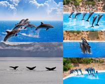 海豚动物摄影时时彩娱乐网站