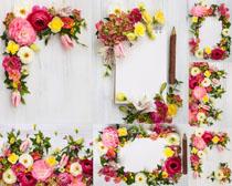 漂亮的相框花朵摄影高清图片