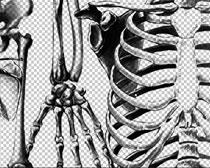 人类骨架笔刷素材