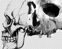 人类头骨笔刷素材