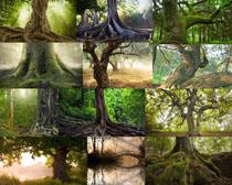 古老树木摄影高清图片