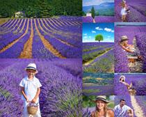 熏衣草与人物拍摄高清图片