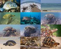 海龟动物摄影时时彩娱乐网站