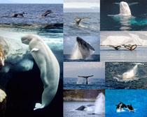 鲸鱼海洋动物摄影时时彩娱乐网站