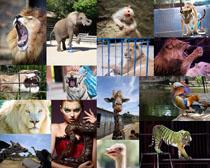 欧美动物摄影高清图片