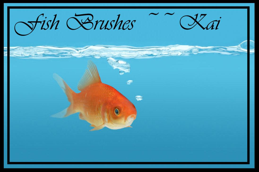 热缩片金鱼图案素材