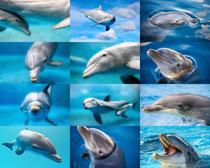 海洋海豚摄影时时彩娱乐网站