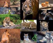豹子与老虎摄影时时彩娱乐网站