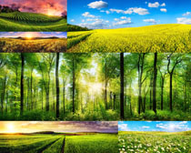 树木植物风景摄影高清图片