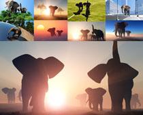 动物大象拍摄时时彩娱乐网站