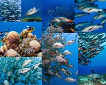 海底世界鱼类摄影高清图片