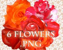 5种玫瑰花花卉笔刷