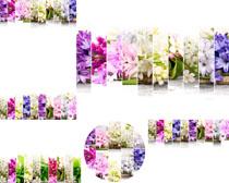 花朵横幅素材摄影高清图片