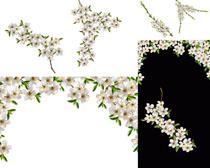 漂亮的梅花框摄影高清图片