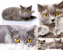 大眼晴猫摄影时时彩娱乐网站
