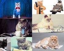 可爱猫咪拍摄写真时时彩娱乐网站