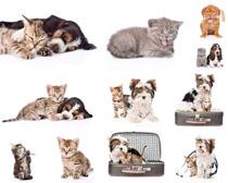 猫咪写真摄影时时彩娱乐网站