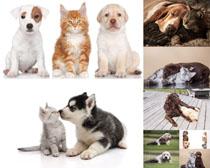 猫咪与小狗摄影时时彩娱乐网站