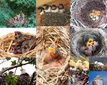 鸟窝小鸟摄影时时彩娱乐网站