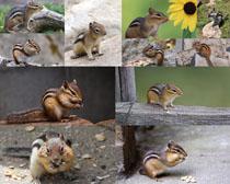 可爱松鼠摄影时时彩娱乐网站